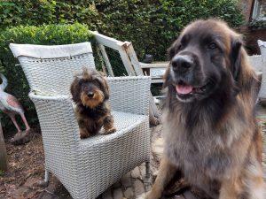 Hondenresort Darling