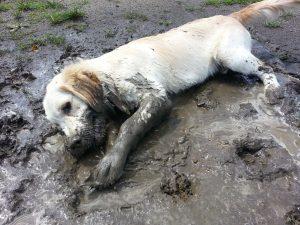hondenwasruimte